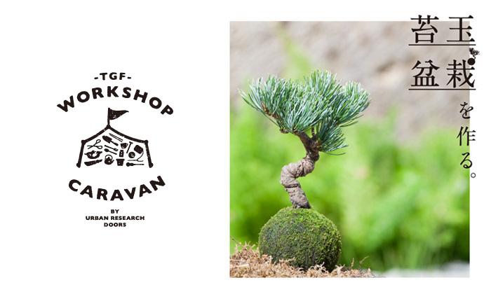 【10月9日開催】苔玉盆栽を作るワークショップ at 南船場 DOORS HOUSE