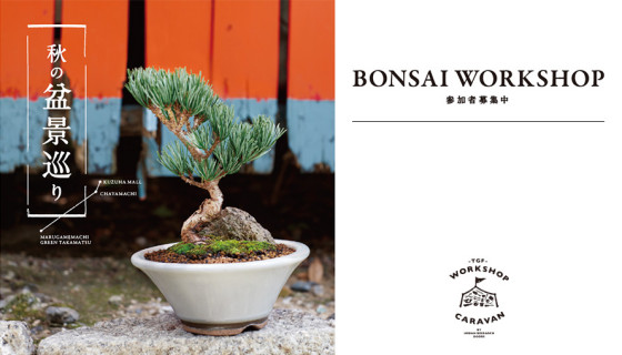 140818_bonsai_top_02
