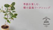 151112_tsubaki_top