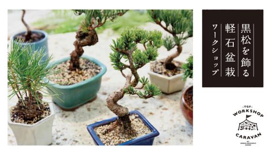 160908_bonsai_top