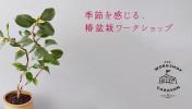 161117_tsubaki_top