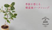 季節を感じる、椿盆栽ワークショップ