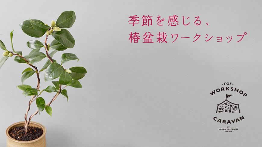 【11月23日開催】季節を感じる、椿盆栽ワークショップ at クレフィ三宮店