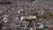ミモザの木でChristmas Deerを作るワークショップ