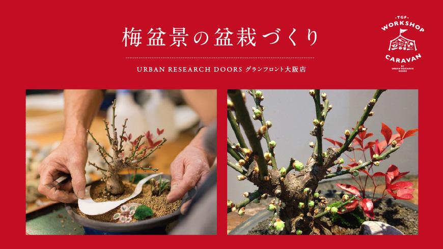 【12月8日開催】お正月飾り「梅盆景の盆栽」を作るワークショップ <br />at グランフロント大阪店