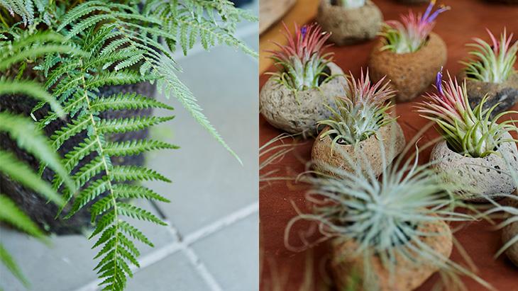 3月2日(土)より南船場店併設DOORS HOUSEにて<br />植物をテーマにした期間限定ショップ 「植物と◯◯」を開催!